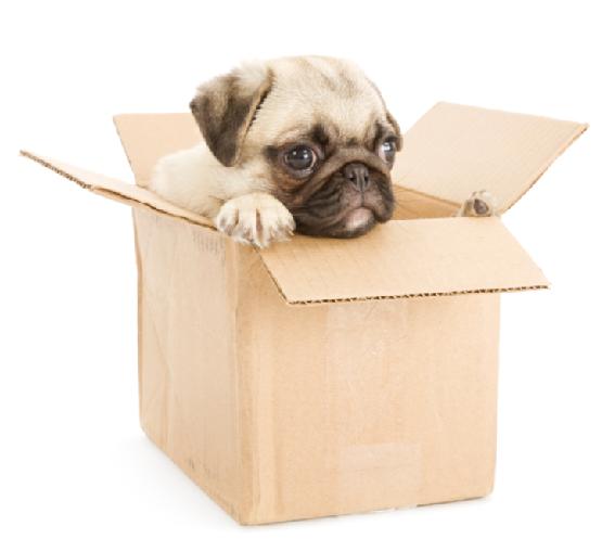 Elérhető árakon igényelhet profi költöztetést és bútorszállítást a cégtől.
