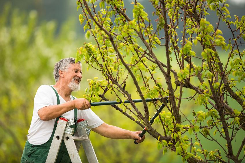 Ha biztosra akarja venni, hogy kertjét valódi profik ápolják, bátran vegye fel a kapcsolatot a Green Forage Kft-vel!